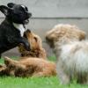 פנסיון כלבים גם בימים של קורונה